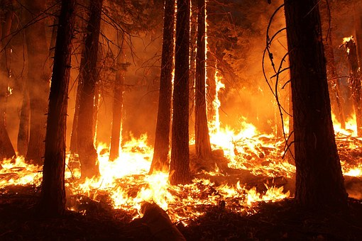 brush and wildfire issues in California